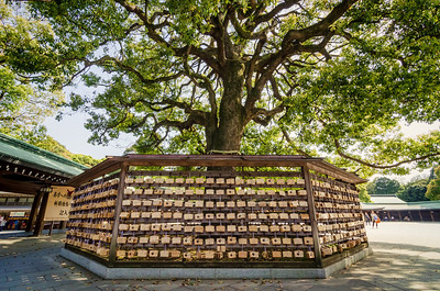 Ema and the Oak Tree